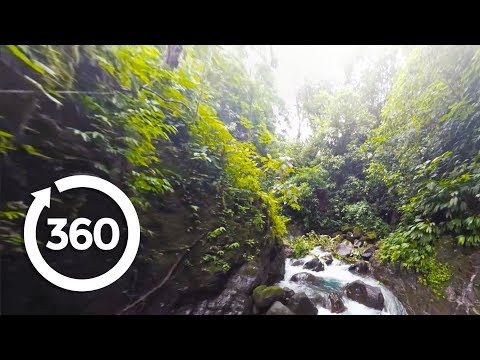 Through the Rainforest (360 Video)