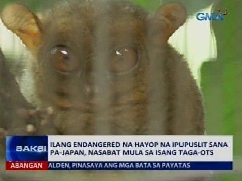 Saksi: Ilang endangered na hayop na ipupuslit sana pa-Japan, nasabat