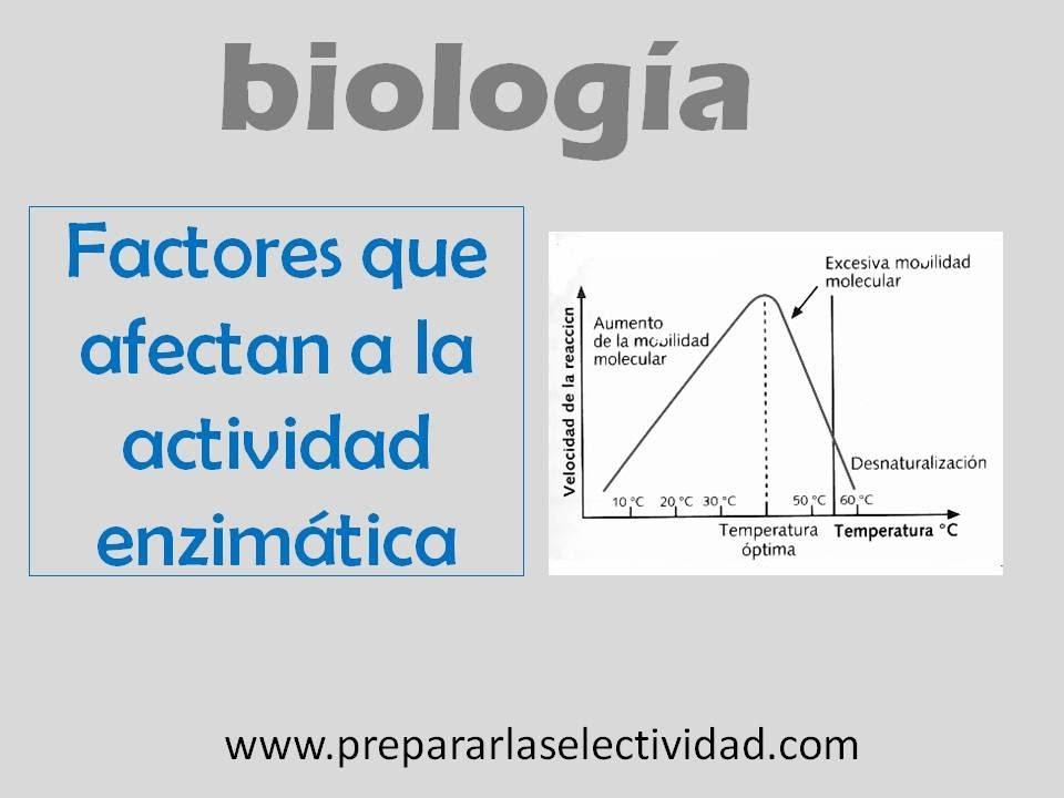Factores que afectan a la actividad enzim�tica - YouTube