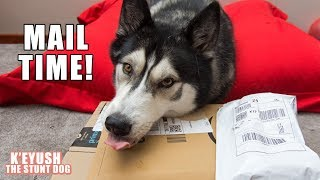 Husky Opens Gifts From Subscribers! | Mail Time