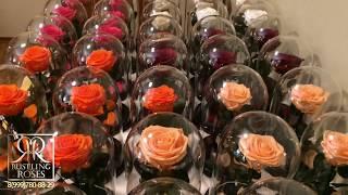 Стабилизированные розы в колбе оптом toprozaopt
