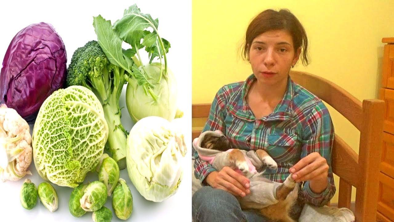 Как сохранить капусту в домашних условиях в квартире 334