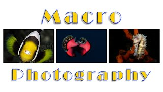 6 steps underwater photography . Part 3 : macro photography