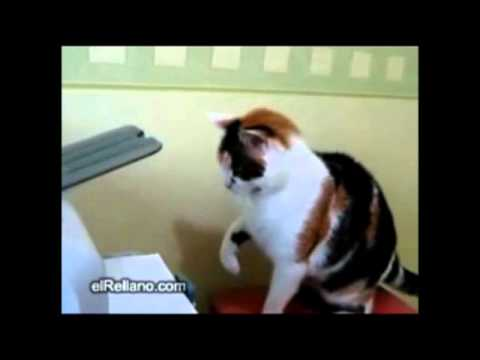 Cat vs Printer - The Translation