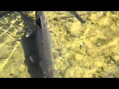 San Juan River Hog trout Fly Fishing never too old for this sports Sept 2011