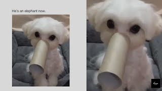 omg this dog is so cute 😺😻😹   Funny instagram Dogs Video Compilation #5