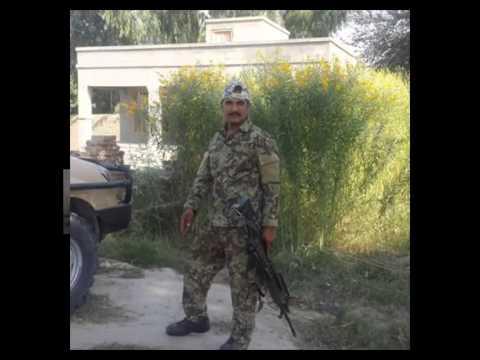 Qasim afghan tiger