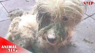 Poor Dogs Never Freed From The Cage, Then A Woman Comes In Their Life and Rescues Them