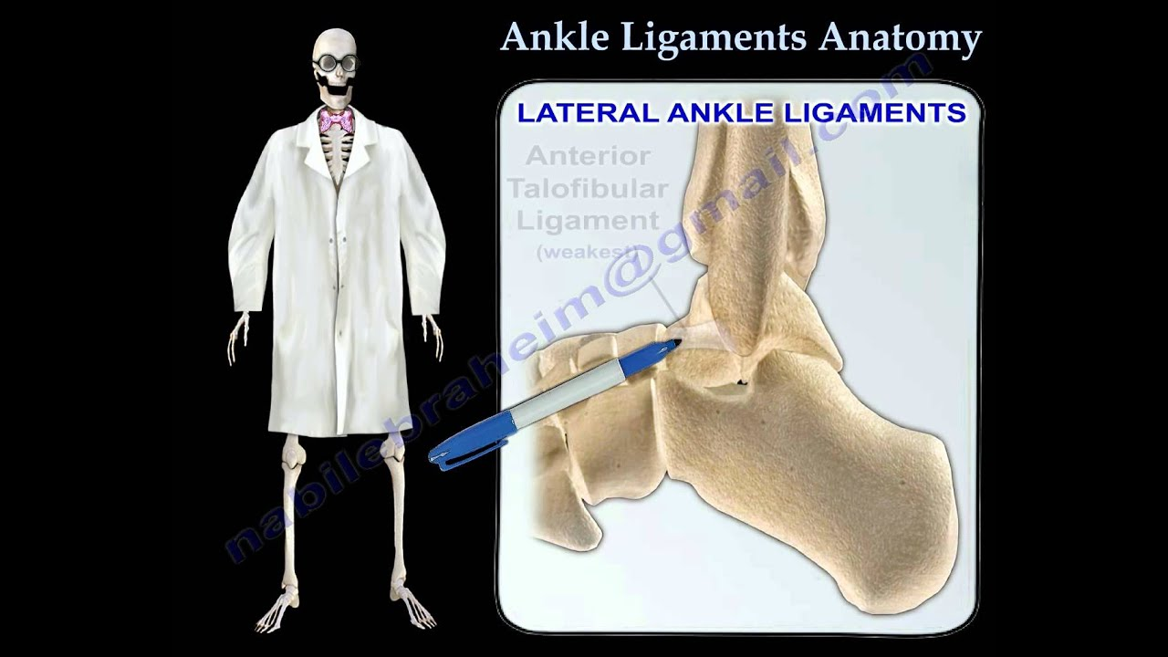 Ankle Ligaments Anatomy - Everything You Need To Know