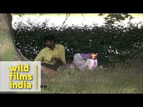 Couples Meet Clandestinely In Kolkata Park, India video