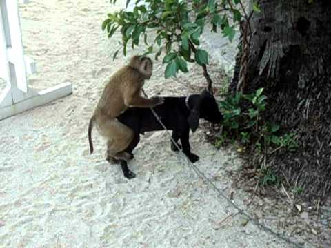 monkey-tries-to-have-sex-with-dog.html