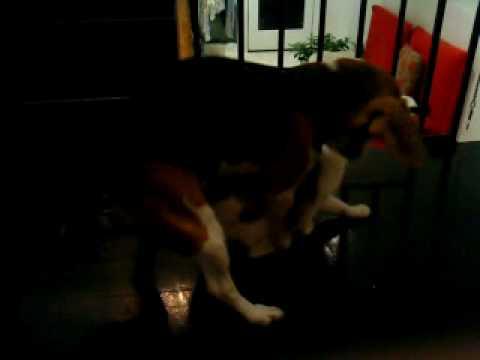 Female Dog try to xxx cat!!!