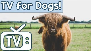 DOG TV: TV for Dogs to Watch and Relax to! Relaxing Nature TV Combined with Music to Calm Dogs!