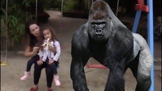 Kids and monkey, Johny Johny Yes Papa #131415