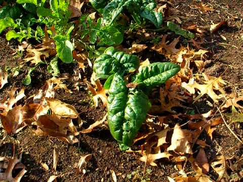How To Grow   Frost Proof Vegetables  Late Fall or Early Spring