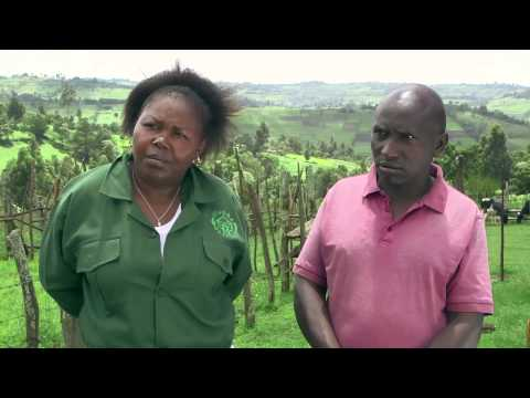 Shamba Shape Up (Swahili) - Chicken, Potatoes, Financial Literacy