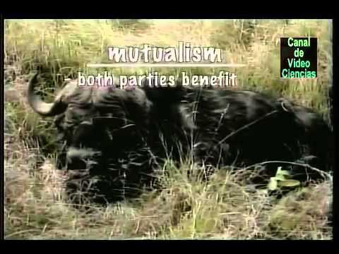 Elementos de biología   Ecosistemas