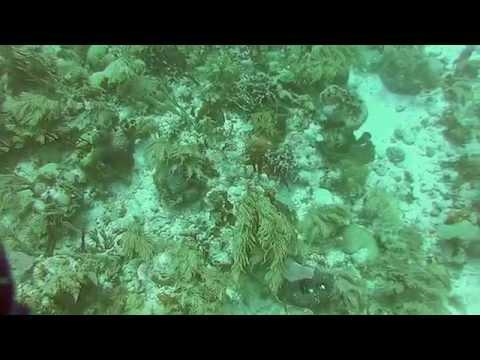 Isla de Roatan SCUBA diving -
