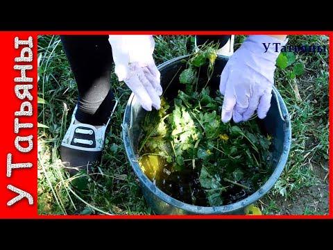 ЧИСТОТЕЛ избавит ваш САД и ОГОРОД от: тли, моли, листовертки, плодожерки, трипсов, белянки и блошек.