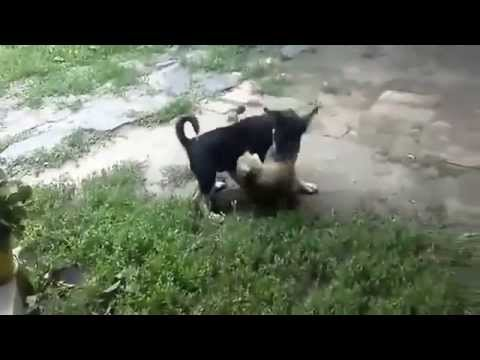 Подборка прикольных животных Часть 2. Funny animals