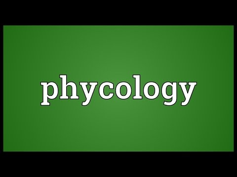 Header of phycology