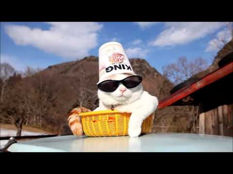 Крутой кот на отдыхе MP4 Юмор! Прикол! Смех