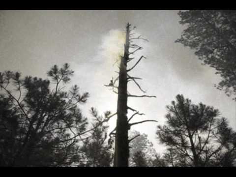 Mormon Lake Hotshots 2009 Saw