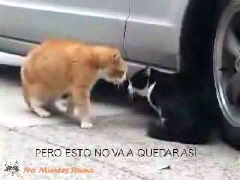 Videos de Animales y Mascotas Video Bronca al gatito