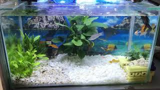 Lọc hồ cá đơn giản nước trong veo