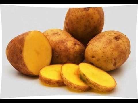 Почему картофель после подмораживания становится сладковатым