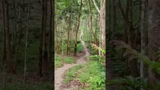Gowes sehat di kebun Karet kab Tulangbawang prov Lampung ...