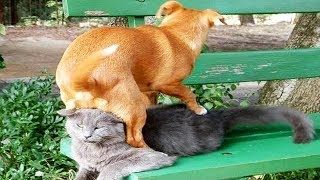 Funny Dogs and Cats - Compilation