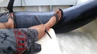 Attaque! un marlin lui transperce la jambe..