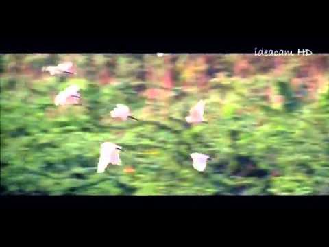Karutha Penne  ~ Thenmavin Kombathu Malayalam Song