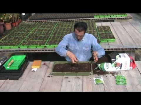 semina www.ilgiardinodelgiardinaggio.com