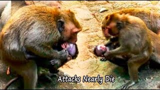 Nearly Die | DeeDee Attack Poor Baby Daniela Nearly Pass Away By Angry Baby Daniela Reply Back
