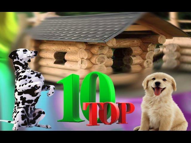 Самые красивые собаки в мире  colorslife