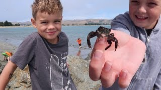 🦀 WE CATCH THE BIGGEST CRAB EVER! 🦀 Day at the Beach (Family Friendly Fun Vlogs 2018)