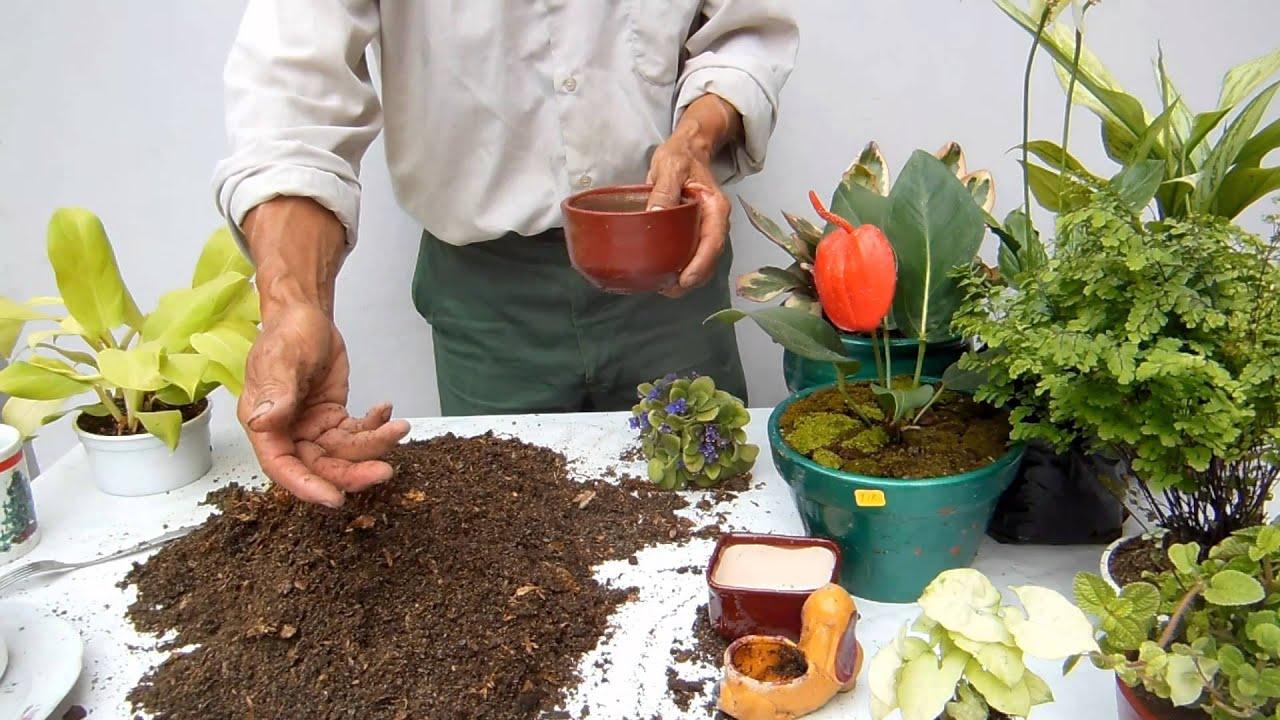 Tierra preparada para plantas de interior youtube - Plantas d interior ...