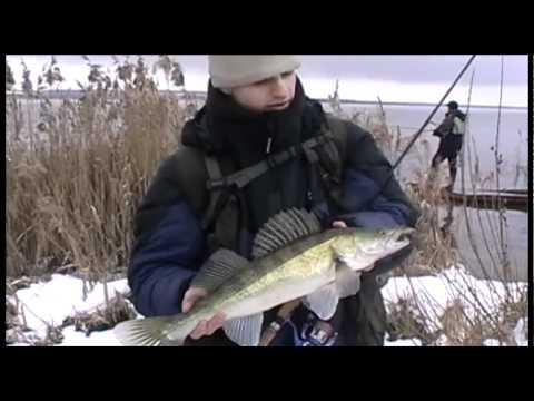 Ловля судака на Курчатовском водохранилище