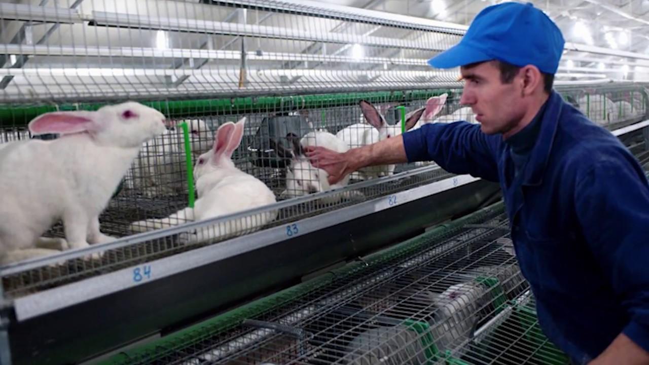 Бизнес выращивание кроликов 94