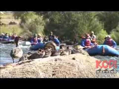 Whitewater Rafting: Browns Canyon Arkansas River in Colorado