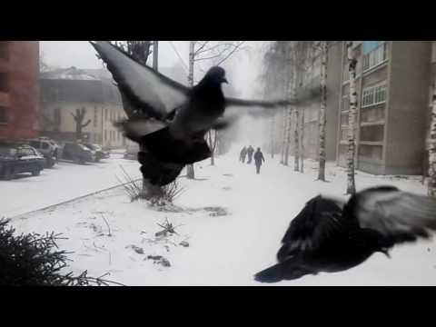 20.04.2017 Киров. Вятка. Весна, апрель, снегопад, метель...