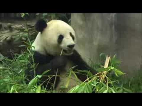 Panda Tales