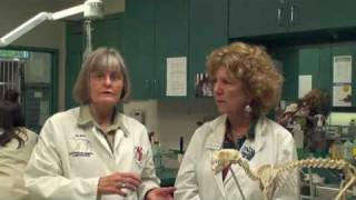 Dr. Josie Thompson and Susan West, DC, discuss arthritis