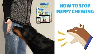 How To Stop Puppy Chewing
