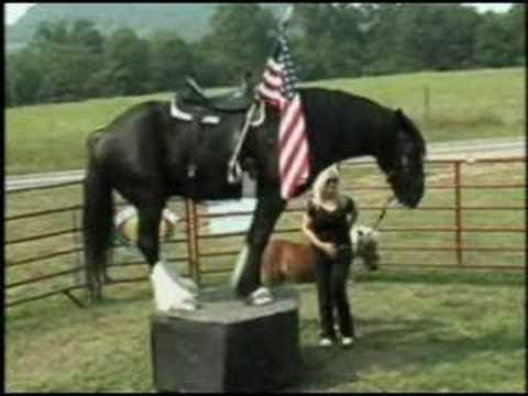 The Big Horse Show