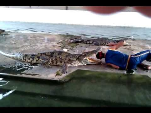 Crocodile Show Samphran Elephant Grounds Bangkok, Thailand death attack thai girls women funny