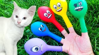 Animals Finger Family Song for LEARNING COLORS with REAL Cat & Smiley Face Balloons - Baby Songs