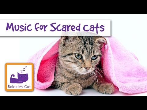 Music for injured and scared cats. Soothing relaxing music for poorly ill cats